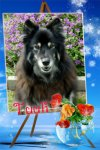 Tuuli of the Trish family