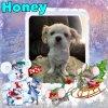 Honey of the WayneShead family