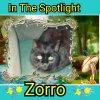 Zorro of the nyssen family