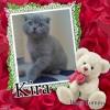 Angel Kira of the vesnahunjadi family