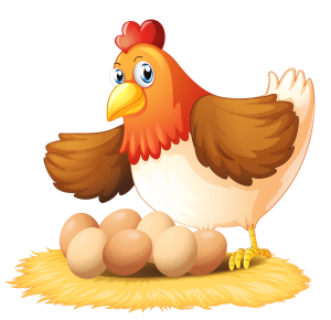 a mother hen with eggs