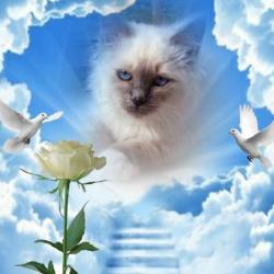Indigo Frost