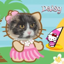 Daisy (Blanche)