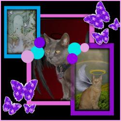 Ht Angels Boys (Lindakatz)