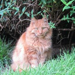 Ginger (Oldwoman)