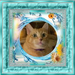 Kody (Pcats224)