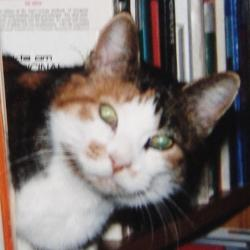 Mimi (Rangoon)