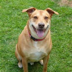 Angel Buddy