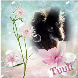 Tuuli (Trish)