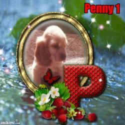 Penny 1