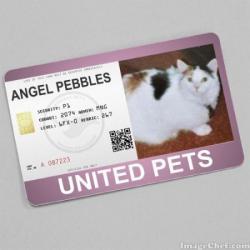 Pebbles (WayneShead)