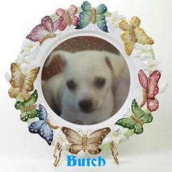 Butch (WayneShead)