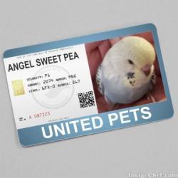Sweet Pea (WayneShead)