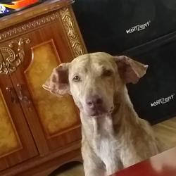 Stepicho (animallover)