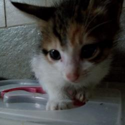 Patches (animallover)