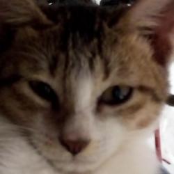 Annabelle (animallover)