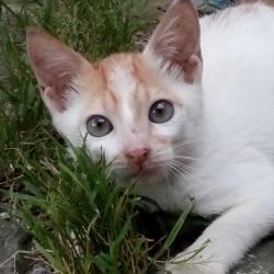 Precious (animallover)