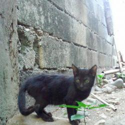 Blackie (animallover)