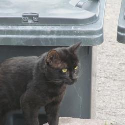 My Foster Cat (bbct549)