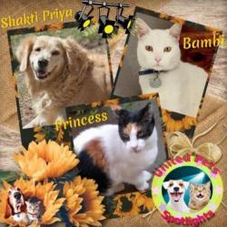 Shakti Priya