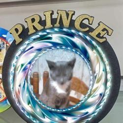 Prince Tošo