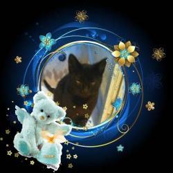 King  Živko