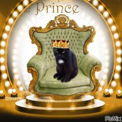Prince Živko