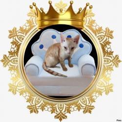 Prince Cvrle (zoza1958)